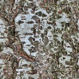 Photo realistic texture of tree bark in high resolution royalty free stock images
