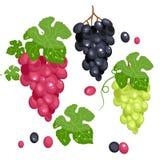 Photo realistic grape set. Full , isolated on white. Green grape, red grape, black grape. Stock Stock Photos