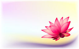 Photo-realistic lotus flower. Vector photo-realistic lotus flower on abstract background Stock Photography