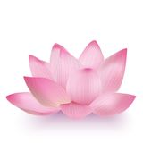 Photo-Realistic Lotus Flower Royalty-vrije Stock Afbeeldingen