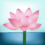 Photo-Realistic Lotus Flower In Water Royalty Free Stock Photography