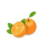 Photo Realistic Set Orange Fruits Stock Photography