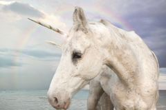 Photo Realistic Unicorn. Walking by the ocean with rainbow sky stock photography