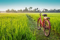 Red bicycle with rural view background royalty free stock photo