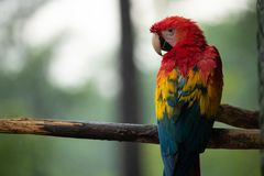 Photo of Red, Blue, and Yellow Parrot on Tree Branch Stock Images