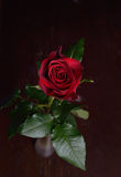 Photo of a red rose in vase on brown wooden table. Perfection of Royalty Free Stock Images