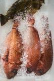 A Photo of Red Sea Bream or Madai at fish market stock image