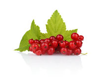 Photo of redcurrant with leaf  on white Stock Photos