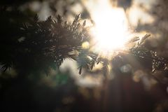 Sunlight shining through branches stock photo