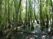 Riparian forest in the summer Stock Photo
