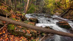 Photo of River in Forest Stock Image