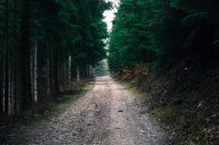 Photo of Road in Forest Stock Photos