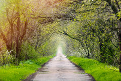 Photo of the road Royalty Free Stock Images