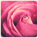 Photo rose de vintage Photographie stock