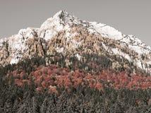 Photo sélectionnée par couleur Images libres de droits