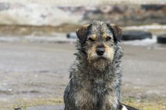 Sad homeless dog on a cold spring afternoon. Photo of sad homeless dog on a cold spring afternoon Royalty Free Stock Photos