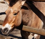 The photo of sad look of horse in the cage. Which can be good illustration of wild nature stock photo