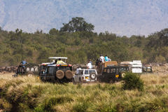 Photo safari in Africa. Safari in Masai Mara. Kenya Royalty Free Stock Photo
