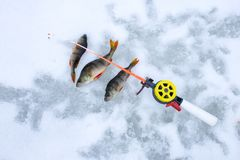 Photo scene with ice winter fishing. Caught fish perch on ice and snow near short winter fishing rod with a hook or lure on line t. Op view. The idea of royalty free stock photos