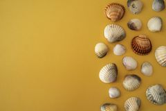 Photo of sea shells. Yellow background. Summer concept. royalty free stock images
