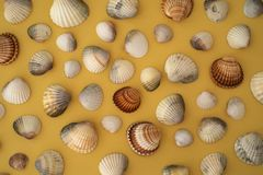Photo of sea shells. Yellow background. Summer concept. stock images