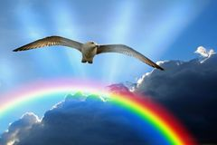 Seagull bird soaring over rainbow stormy clouds sky weather royalty free stock images