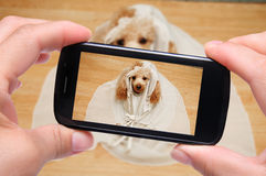Photo self dog. With smartphone Stock Photos
