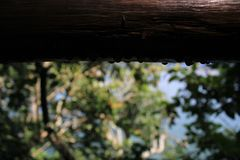 Photo of dew droplets on a tree trunk. royalty free stock photography