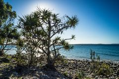 Tree by the ocean stock image