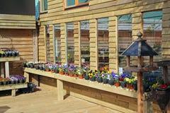 Nursery plants Royalty Free Stock Photo