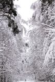 Heavy snow in the city. A photo showing trees thickly covered in heavy snow royalty free stock photo