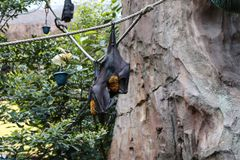 Bats hanging on the rope royalty free stock photos
