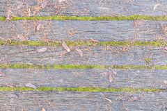 Old boards one. The photo shows a beautiful texture of old boards between which the moss grew. On the boards lie fallen pine needles Stock Photos