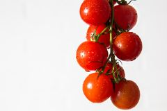 Branch juicy, tomato on a white background stock images