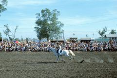 1976. Australia. N.T. Darwin. Rodeo. The Photo shows a ` cowgirl` galloping on her white horse across the ground Stock Image