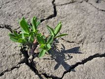 Green plant on cracked earth stock photos