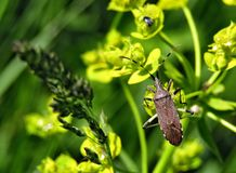 Small dark beetle on a green plant, green background royalty free stock image