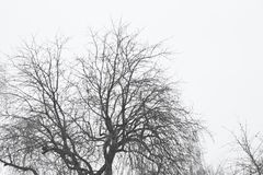 Landscape trees in winter day royalty free stock photos