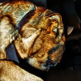 a profile of a dog stock images