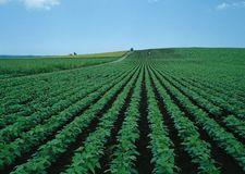 The photo shows a seeded field. The photo shows a seeded field on which something grows stock image
