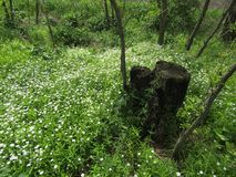 Stump and flower meadow in the forest stock images