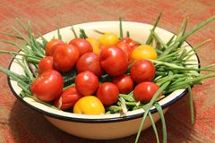 Harvest of vegetables: red and yellow tomatoes, cucumbers, green onions in containers. The photo shows the summer harvest of vegetables.Red and yellow tomatoes royalty free stock photos