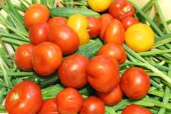 Harvest of vegetables: red and yellow tomatoes, cucumbers, green onions in containers. The photo shows the summer harvest of vegetables.Red and yellow tomatoes stock photo