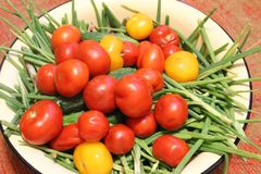 Harvest of vegetables: red and yellow tomatoes, cucumbers, green onions in containers. The photo shows the summer harvest of vegetables.Red and yellow tomatoes stock image