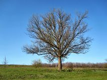Tree in the steppe. This photo shows a tree in the steppe royalty free stock images