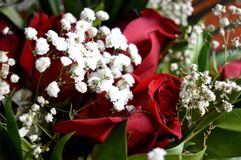 White flowers and red roses. A combination of beauty and subtle naturalness. This photo shows White flowers and red roses. A combination of beauty and subtle Royalty Free Stock Photography
