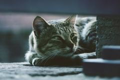 Photo of Silver Tabby Cat Lying on Gray Pavement Stock Image