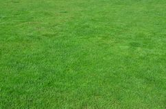 Photo of the site with even-cropped green grass. Lawn or alley of fresh green gras. S royalty free stock photo