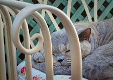 Sleeping napping pedigree cat on garden chaise Royalty Free Stock Photos