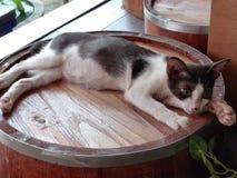 Closeup of photo of sleepy cat royalty free stock photography